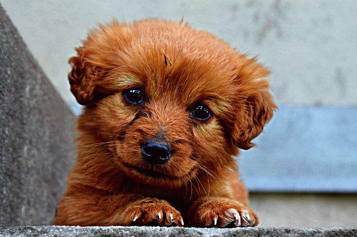 Mon chien tousse, faut-il s?inquiéter ?
