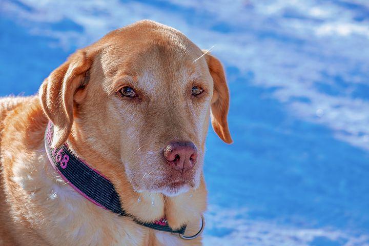 Comment choisir un collier pour chien ?