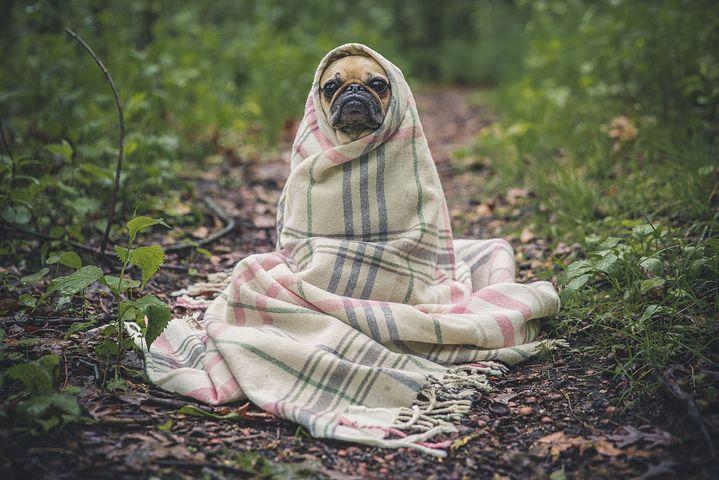Que penser des vêtements pour chien ?