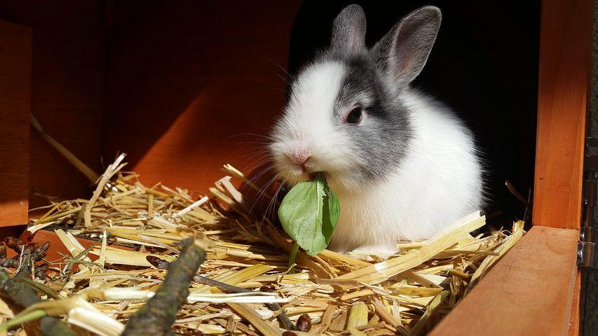 Que mange un lapin ?