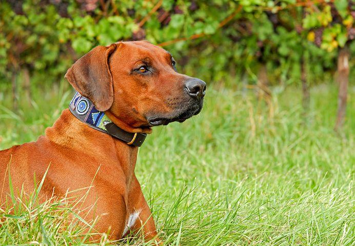 Adopter un chien, comment faire son choix ?