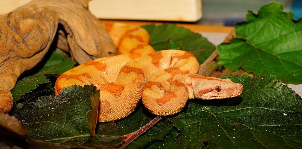 Comment organiser le terrarium de mon serpent ?
